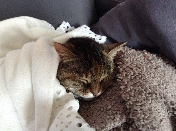 Une bien triste nouvelle à vous annoncer ce soir et je suis encore en état de choc de cette euthanasie que je qualifierai de brutale