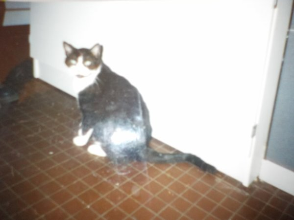 Moments Nostalgie et heureux...avec Zorba, un chat ayant vécu jusque 20 ans malgré une tumeur à la tête!