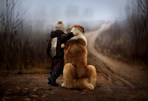 Le plus beau poème sur les chiens que vous lirez