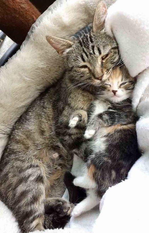 Une chatte errante ramène son chaton unique chez un homme amoureux des chats!