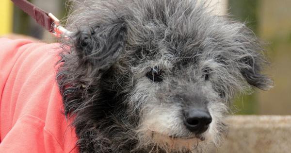 5 conseils pour faciliter le quotidien de son chien âgé!
