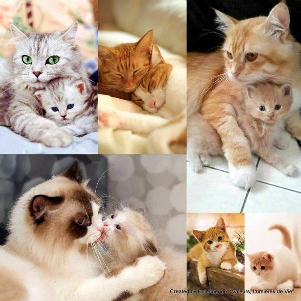 Tellement choux ces mamans et leur bébé