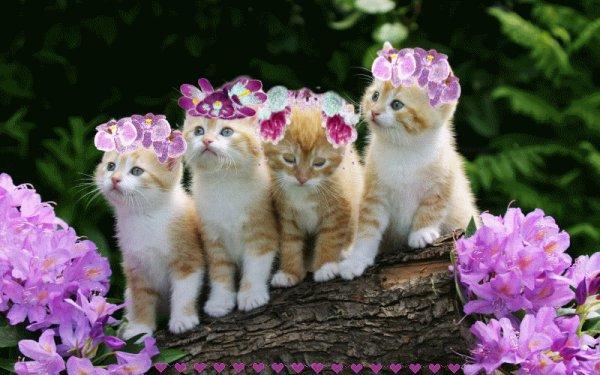 Evaluez votre Amour des Chats!