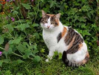 Pour ses chats, Malraux alors ministre des Affaires culturelles casse un monument historique