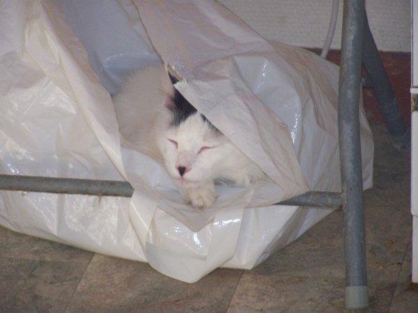 La mission des chats dans notre vie: MOOKY, l'as de la cachette, c'est tout un art chez lui.....