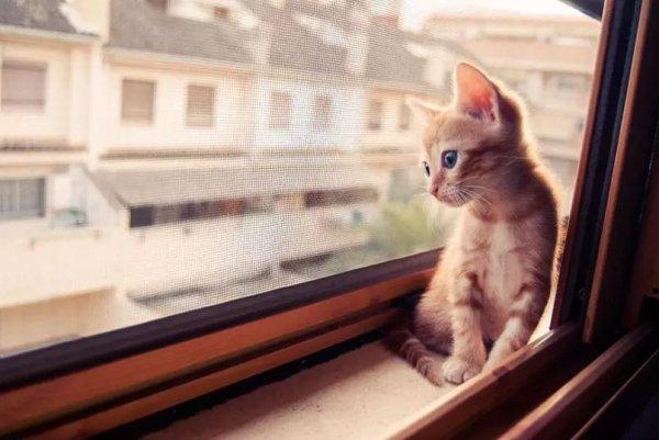 Voici ce qu'endure votre chat lorsque vous n'êtes pas là. Le numéro 4 me touche à chaque fois.