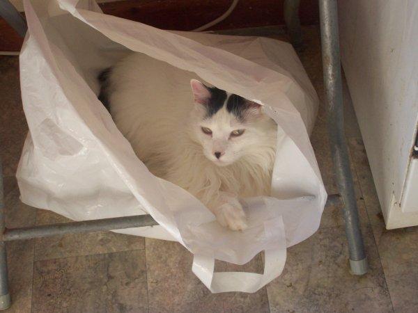 Très cher chat tout exaspérant que tu sois, je t'aime trop content de te retrouver dans la tristesse, dans la solitude, dans la maladie. mon Chat Chéri, mon réconfort, mon Ami.....