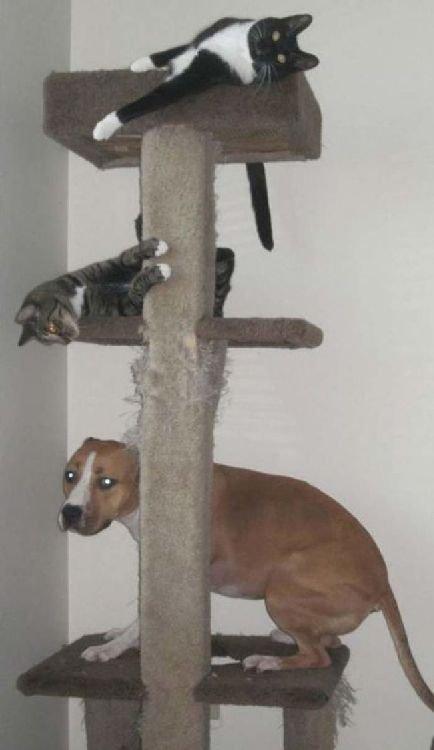 Les Chiens qui se prennent pour des Chats! trop drôles et amusant!