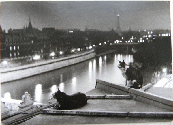 Petits Chats parisiens ......