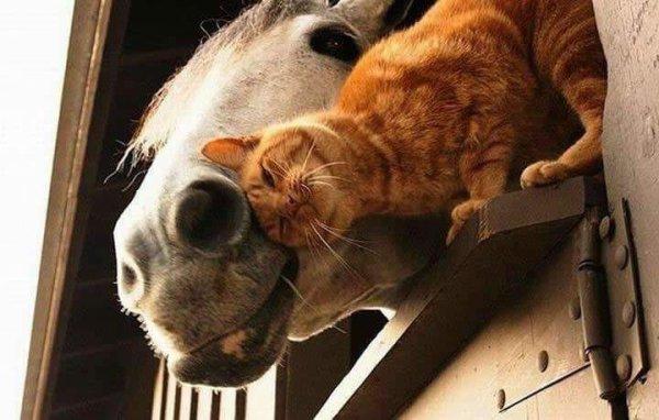 Chats et chevaux, prêts à tout pour avoir des câlins
