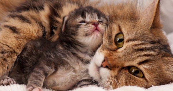 Que d'Amour Maternel entre maman et son chaton!