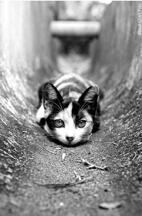 Toujours, Merveilleux le noir et blanc....