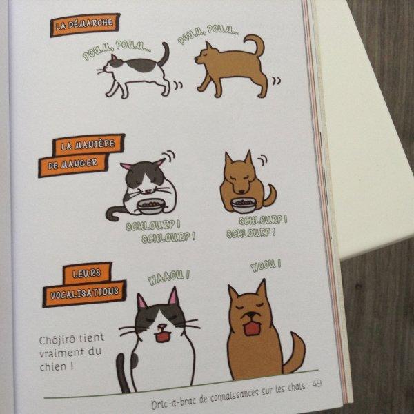 Chats et chiens sont les animaux de compagnie par excellence!