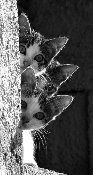 Deuxième série de photos noires et blanches....