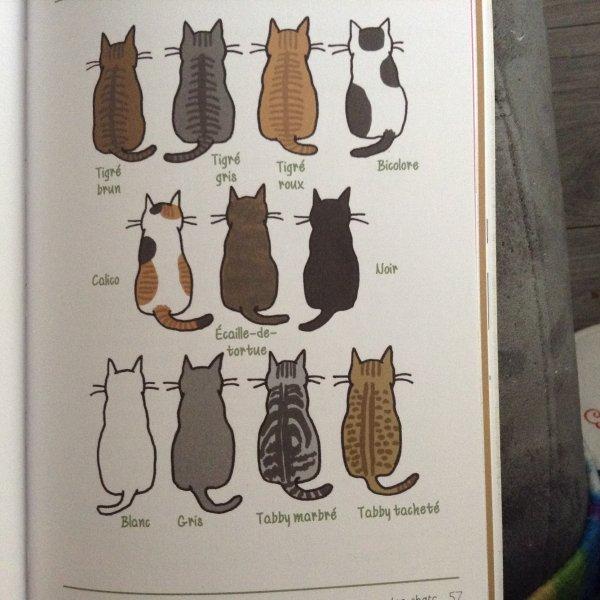 Il n'existe pas de chats à robe blanche sur le dos et noire sur le ventre!