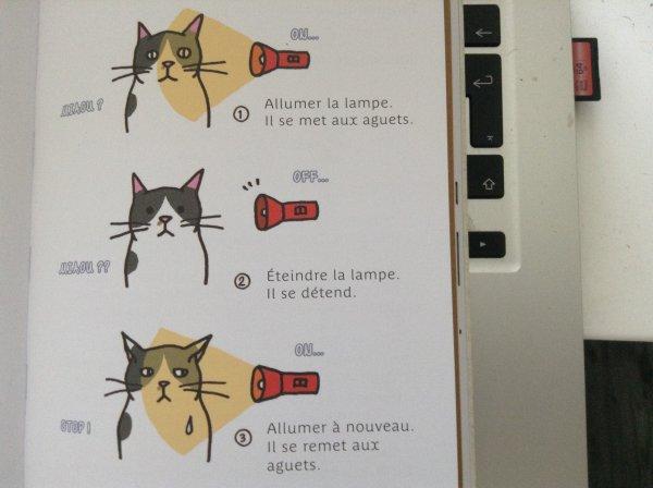 Observer les Pupilles du Chat