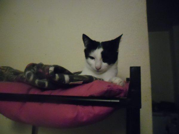 Marilou a décidé de faire une jolie girouette ma poupette, trop mimi!
