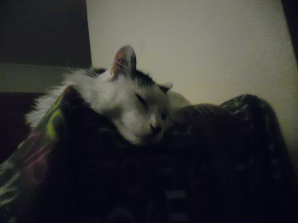 Arbre à chats: Mooky fût le premier à l'inaugurer......fabrication maison, ma fille jetait une armoire en tissu, j'ai récupéré l'intérieur, mis les uns sur les autres, j'avais plein de coussins inutiles, alors je leur ai mis un coussin à chaque étage et recouvert d'un plaid  d'une couleur différente, mes doudous sont contents et l'ont vite squatté