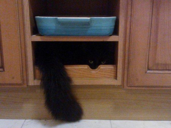 Quand les chats jouent à cache cache.....