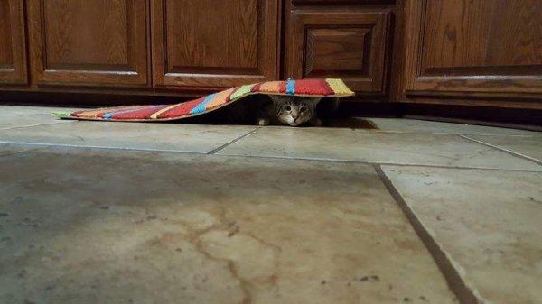 Quand les chats jouent à cache cache, suite.....