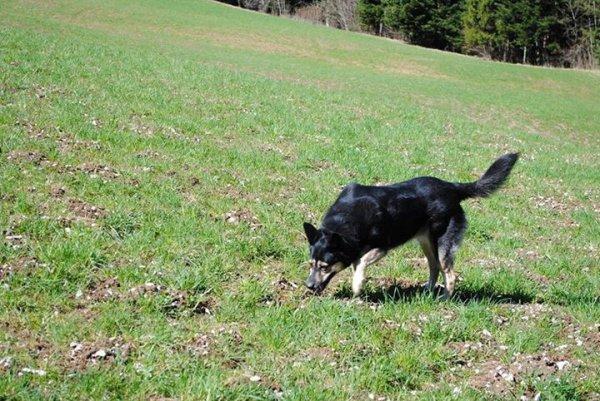 Malika, la chienne de ma fille, adoptée en même temps que Lea