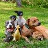 Quatre chiens, un chat, deux canetons et… une famille formidable !