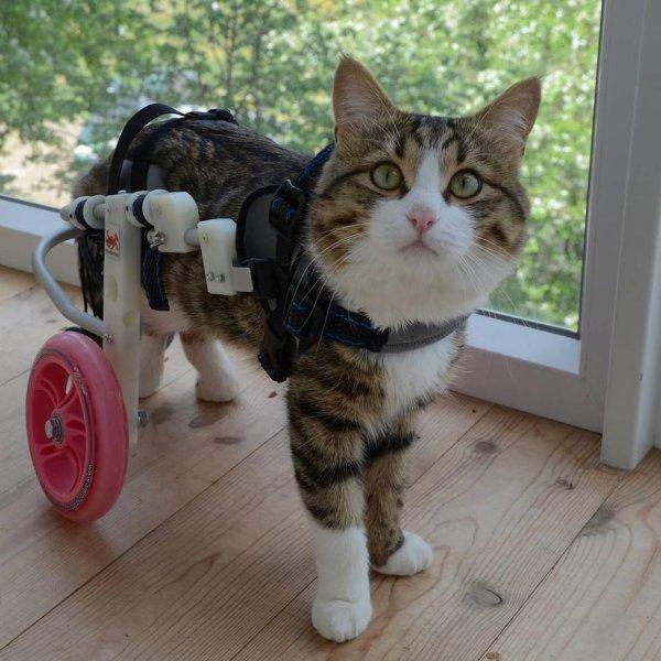 Deux pattes suffisent à ce chat qui profite pleinement de la vie.