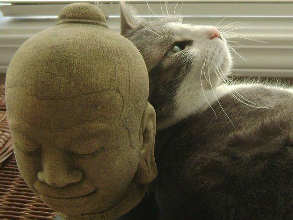 La Légende Bouddhiste sur les Chats.....