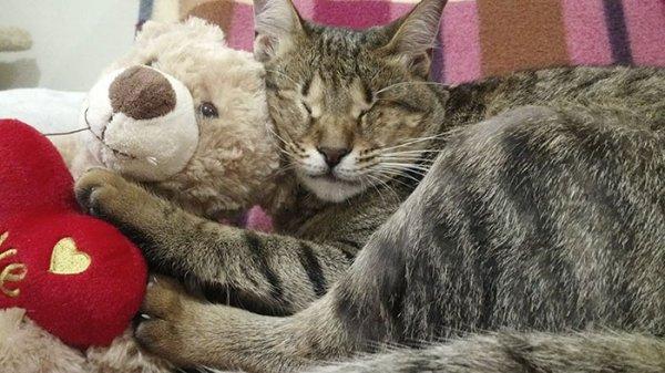 N'ayant personne pour les adopter, ces 3 chats aveugles ont trouvé preneur chez une dame au grand coeur!