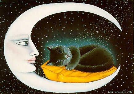 Chats au clair de lune.....