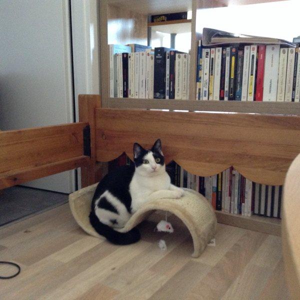 Marilou se plaît dans son nouveau chez moi.....