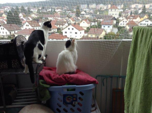 Filet de sécurité mis, mes doudous ont vite profité du balcon, malgré, encore de nombreuses choses à ranger, mais cela a fait des heureux