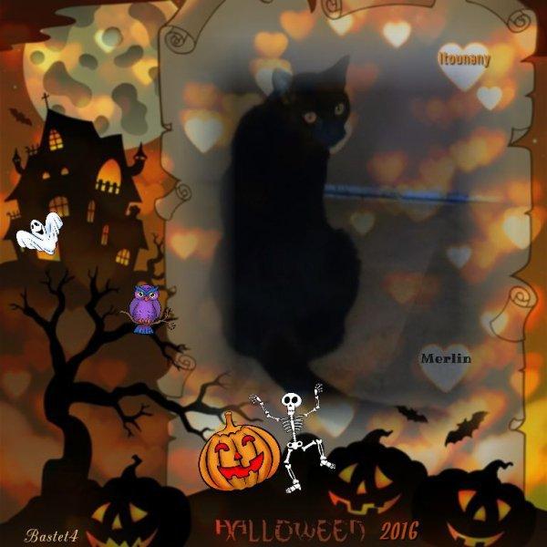Un pelage si soyeux, si doux, si noir vaut bien un article pour Halloween! Merci Titine!