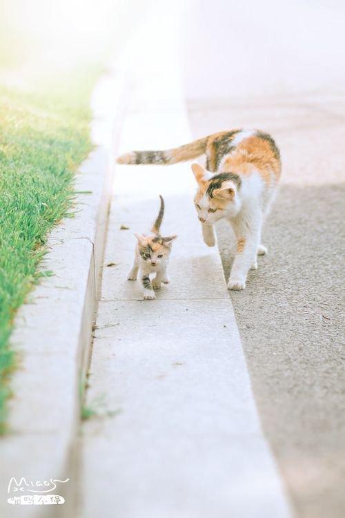 Famille de chats: mère et fille, père et fils sont là pour guider leurs pas.....