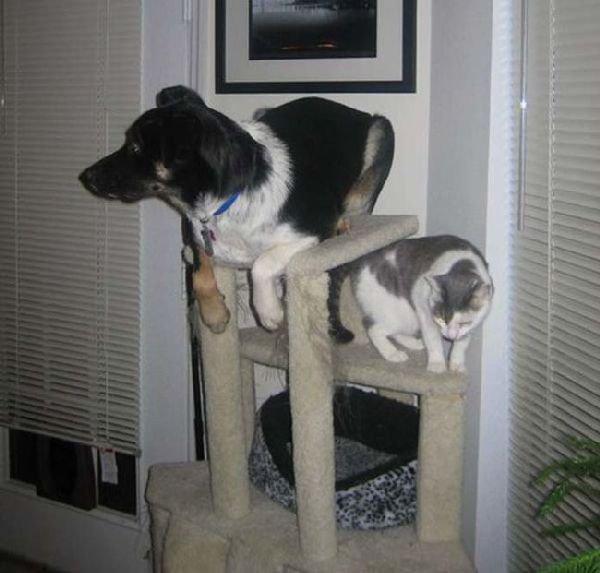 Des Chiens qui se comportent comme des Chats.