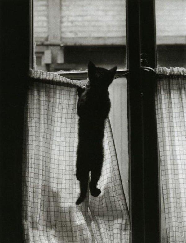 Chats, noir et blanc, parisien, et humour ......