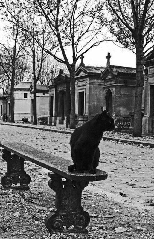 Suite chats, noir et blanc, parisien et avec un peu d'humour.....
