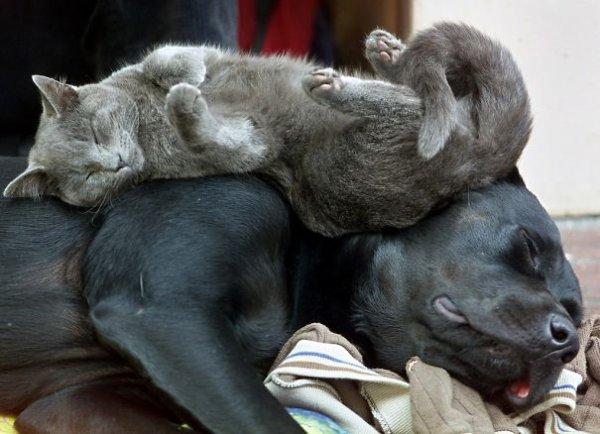 Quand Chiens et Chats dorment ensemble, cela nous donnent de jolis clichés.
