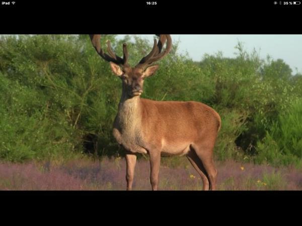 Petit reportage photos....le Roi de la Forêt