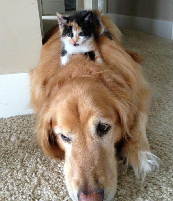 Nouvelle série de chats et chiens dormant ensembles....