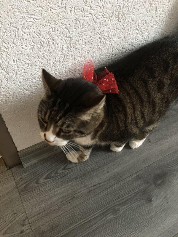 Mickey, le chat de ma fille, était de la fête à Noël....