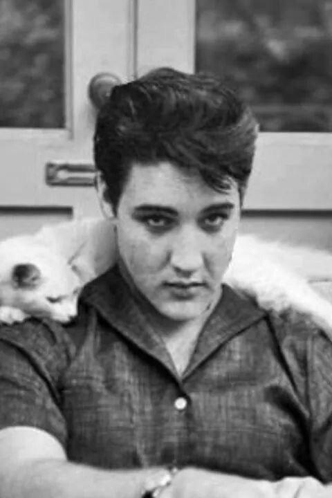 Célébrités et leurs chats: je crois les avoir tous reconnus....Patrick Swayzee, David Bowie, Nicolas Cage, Elvis Presley!