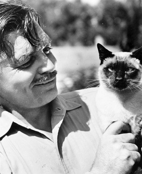Célébrités et leurs chats: Elsa Morante, Léo Ferré, Clark Gable, Fred Astaire