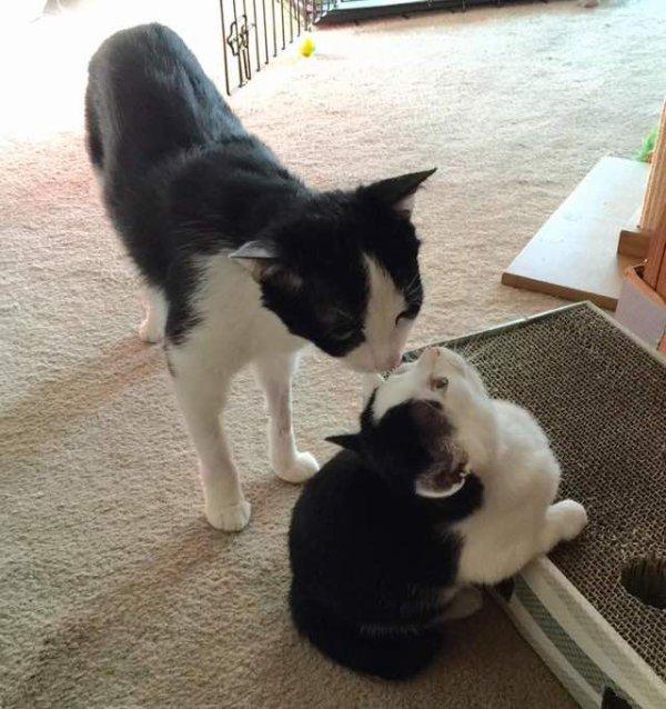 Cette femme sauve la vie d'un chaton condamné à être euthanasié, encore une beau geste comme je les aime.....Mamounette tu pourras remixer sans problèmes!