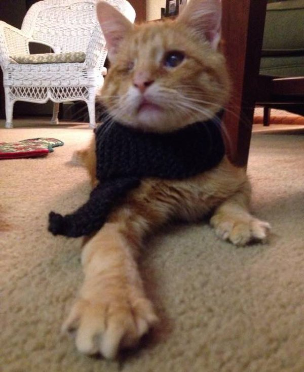 Un chat aveugle sauvé sur le bord de la route retrouve l'amour et la chaleur!