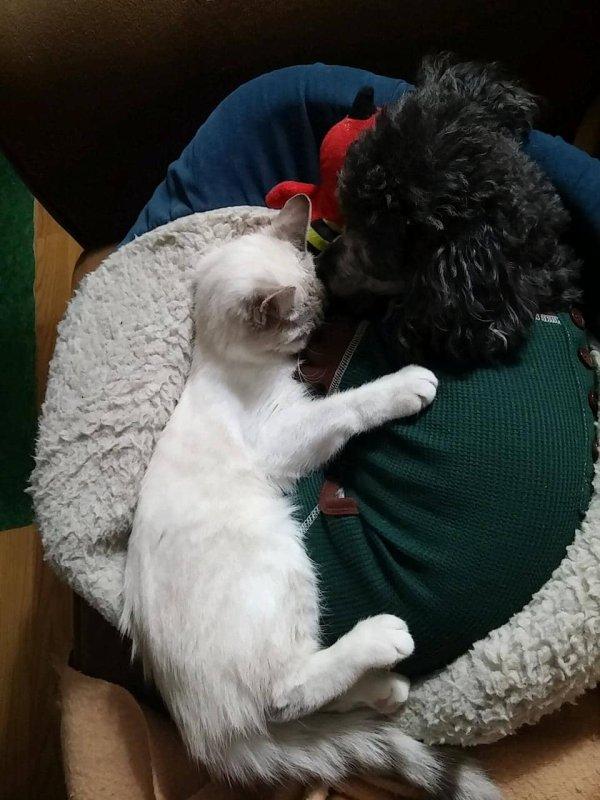 Une petite chatte est retrouvée, les yeux infectés. Une inconnue décide alors de financer tous les soins dont elle a besoin.