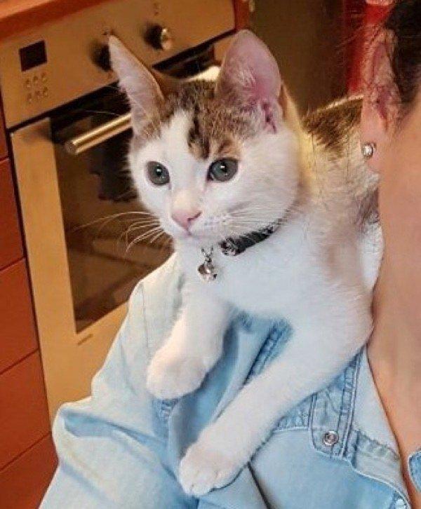 Une femme sauve un chaton calico orphelin trouvé dans une benne à ordures, et découvre qu'il est en fait un matou rarissime…