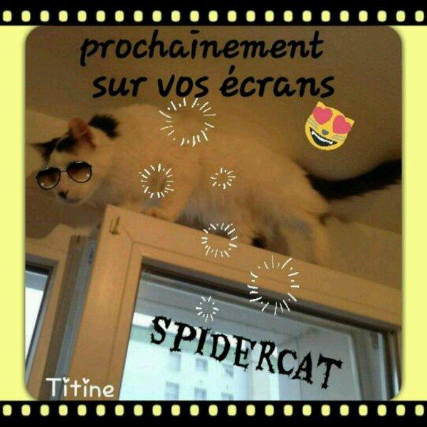 Bientôt, en direct, les aventures de Spider- Cats, l'intrépide qui gagne à tous les coups à Chat- Perché....avec ses copains.