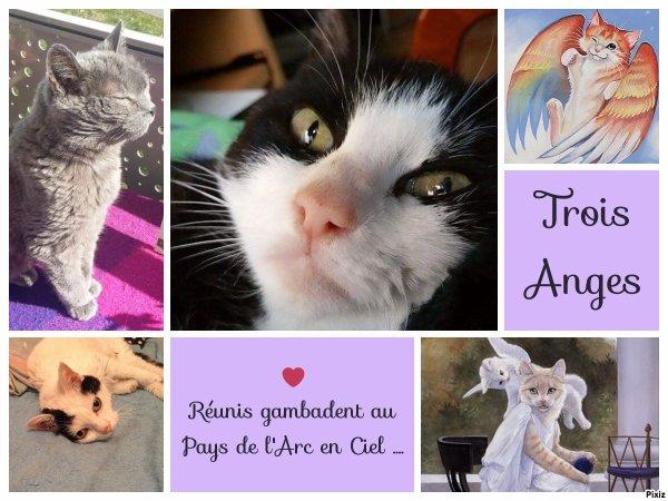Hommage à trois Princesses réunies pour toujours : Amy, Grisounette et Meringue qui nous ont quittées