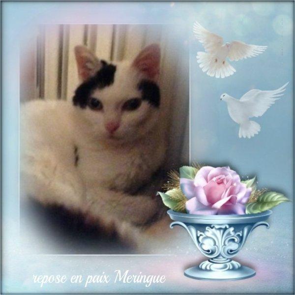 Merci pour ces montages en hommage à nos Mamies chats, de Laika, Bounty et Ciscoo.